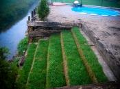Stopnice zelenijo