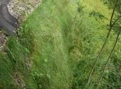Zelena brežina