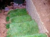 Gestaltung der Gartenumgebung mit unseren natürlichen Lösungen