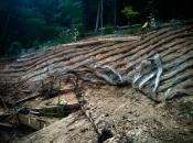 Einrichtung von Erosionsschutzgittern (BVS)