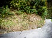 Saniertes Ufer; die sanierten Flächen wachsen wieder zu.
