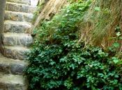 Aus den einst steilen bröckeligen Steinhaufen ist eine attraktive grüne Wand geworden