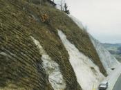 Begrünung der zuvor erosionsgefährdeten Sandwand mit BVS-System